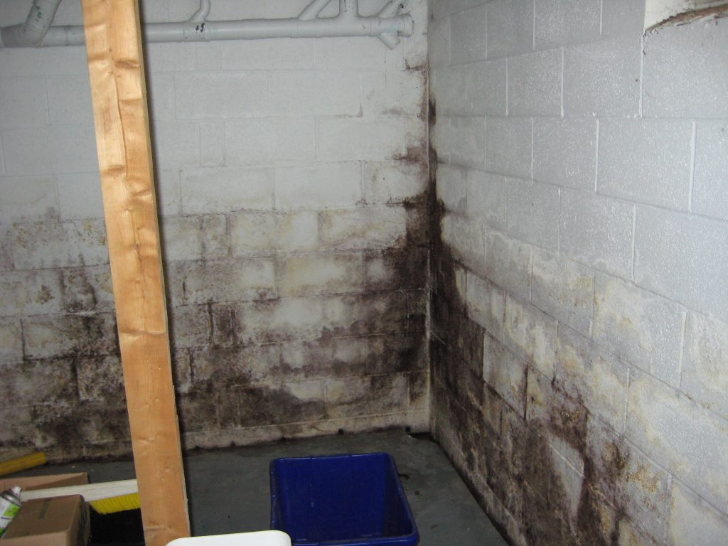 mold in your basement lemont il everdry waterproofing of illinois. Black Bedroom Furniture Sets. Home Design Ideas